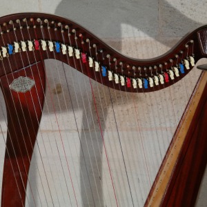 strings of a harp